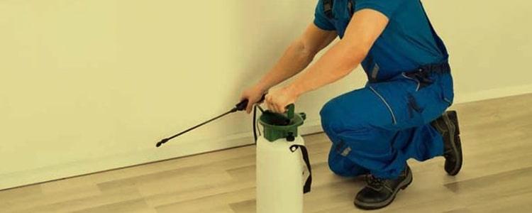 Best Pest Control Goodwood