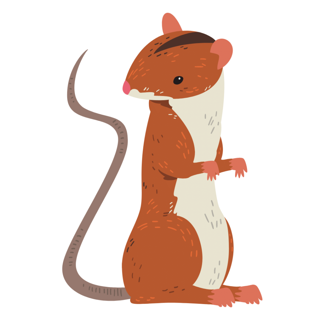 Rodent Control Service in Goodwood